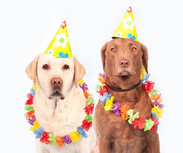 psi na karneval