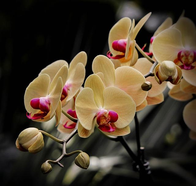 Větvička orchideje.jpg